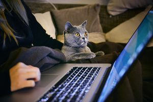 An image of a woman and a cat looking at a laptop.