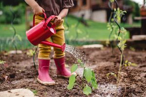 A child using a watering can on a plant