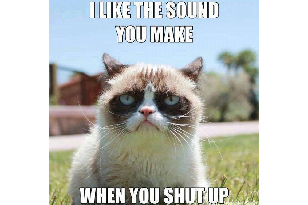 memes cat grumpy meme most internet famous got