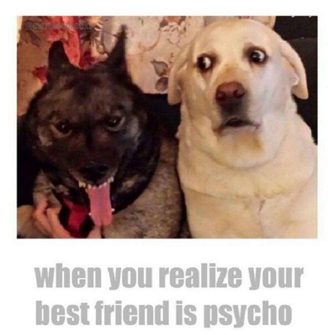 youre my best friend meme