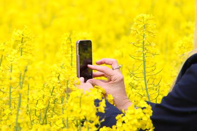 Taking a photo with an iPhone in a field of flowers