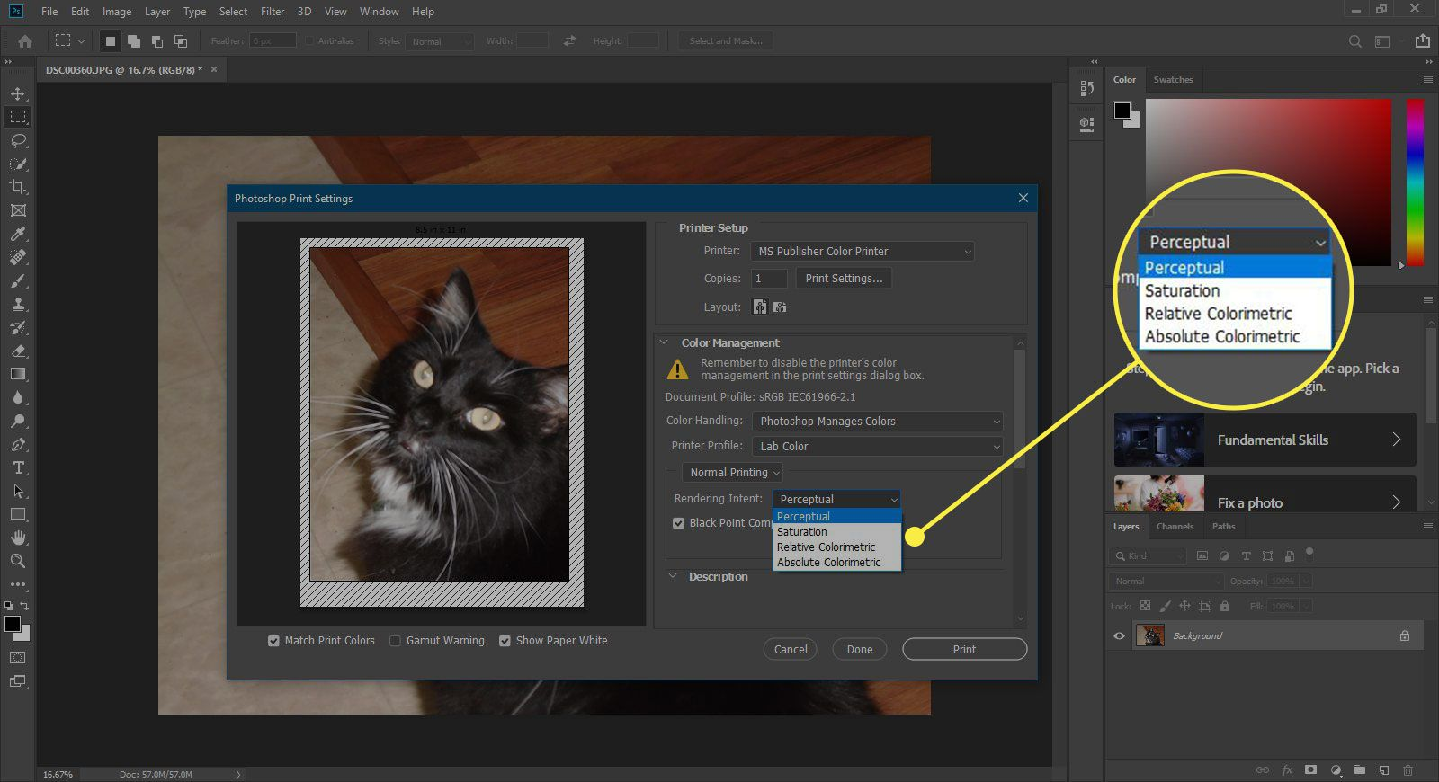 A screenshot of Photoshop's Print window with the Rendering Intent options highlighted