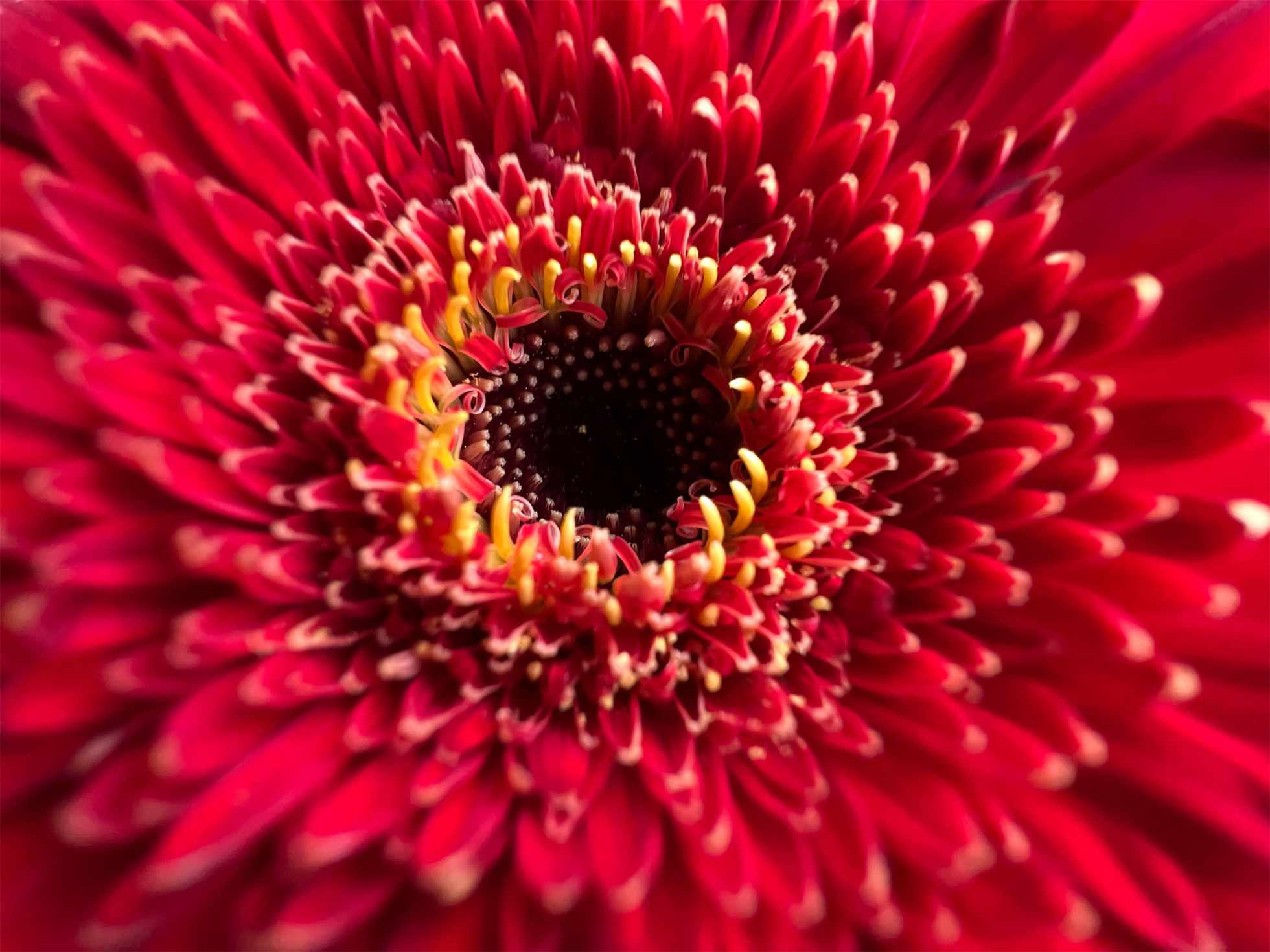 Photo of red flower taken with an iPhone 13 Pro