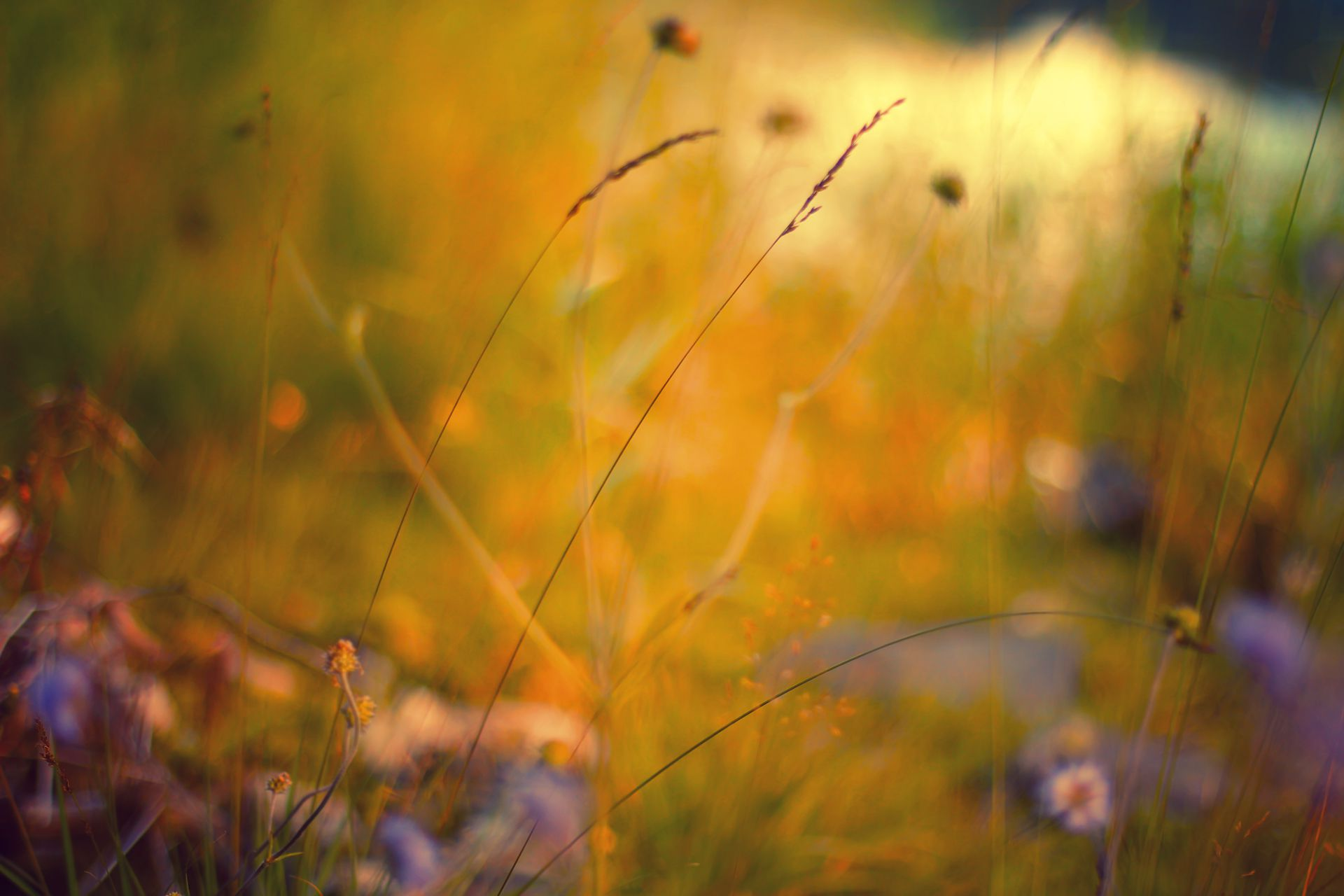 Free autumn wallpaper featuring a golden field with wildflowers.