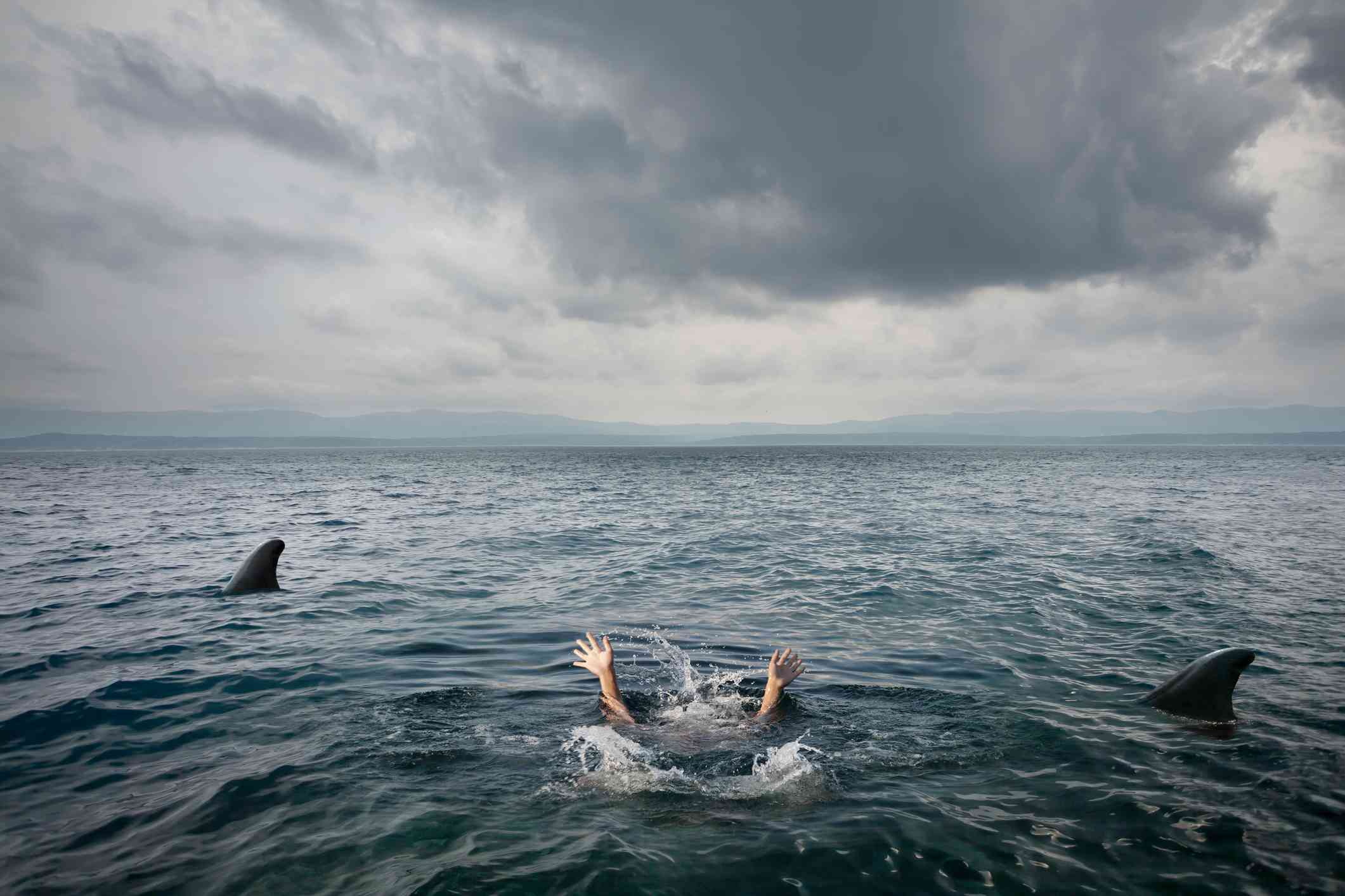 A staged image of someone under the water being attacked by sharks.