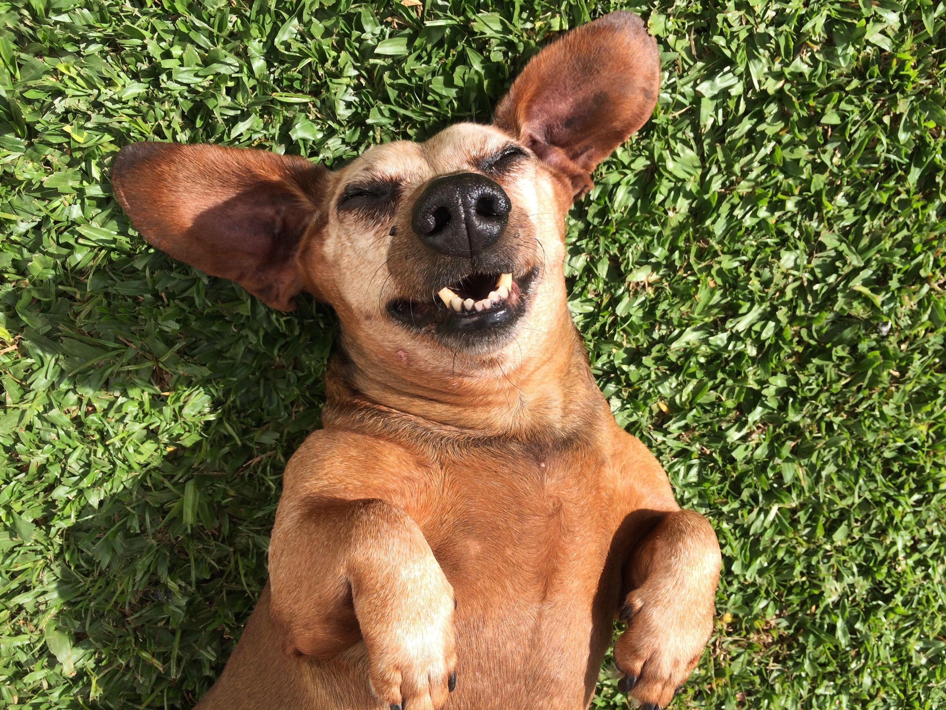 The 21 Best Dog Memes