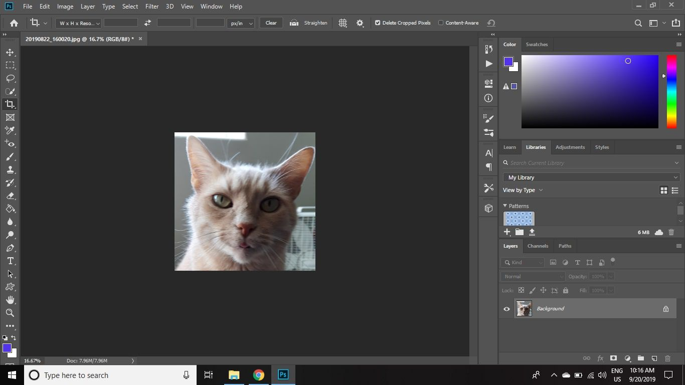 A cropped image of a cat in Photoshop CC