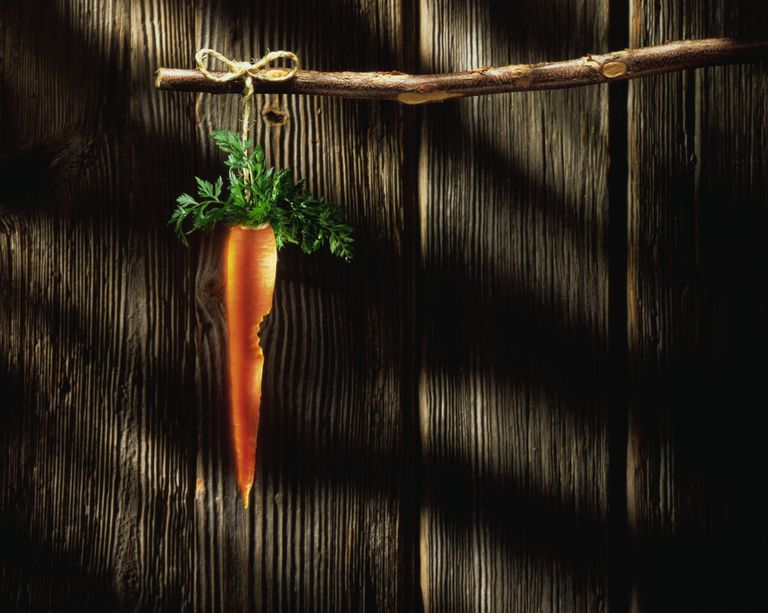 Carrot hanging from branch