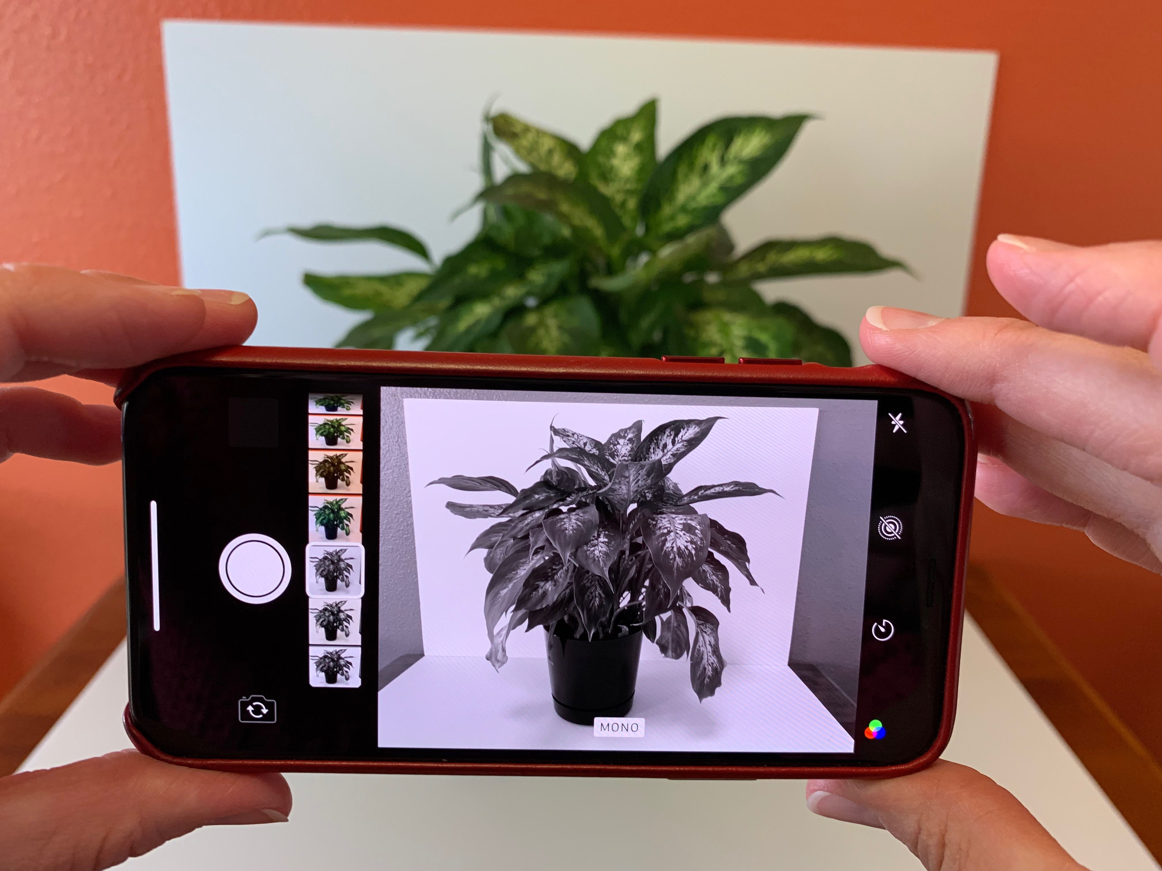 Photo of iPhone with MONO filter active, shows subject of a plant in varies shades from white to black
