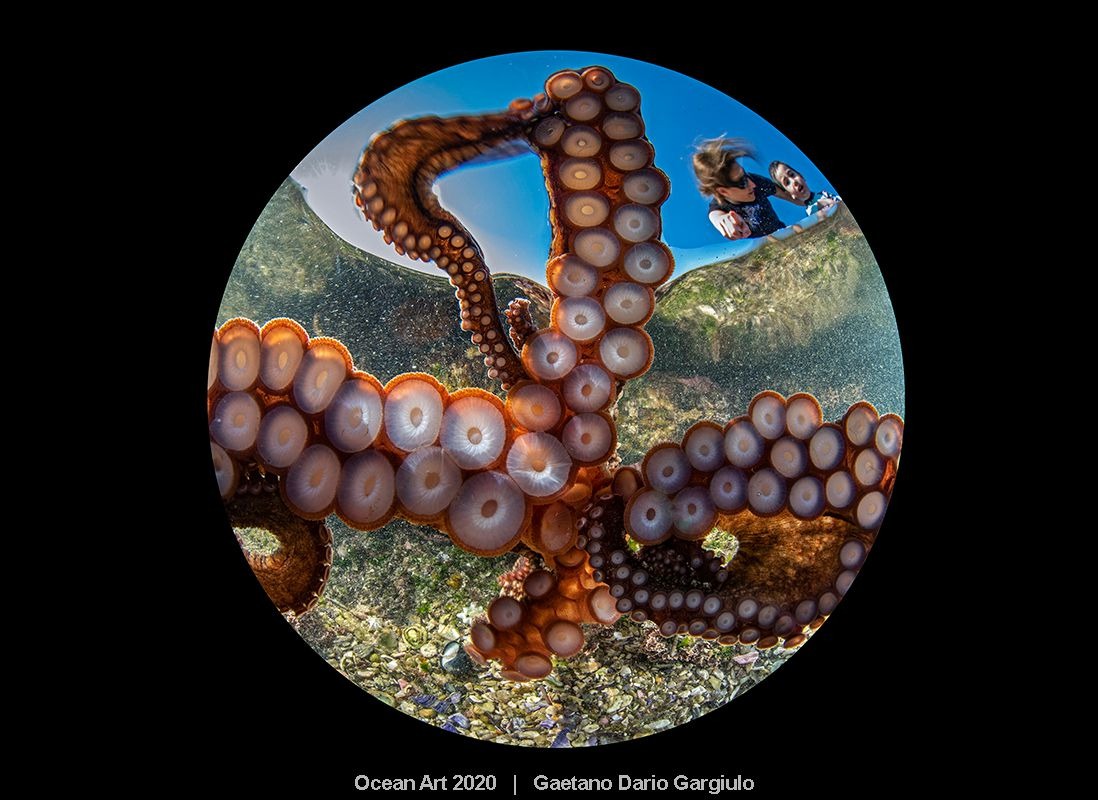 An underwater photograph of an octopus from below it, the first prize winner in the Underwater Photography Guide's Ocean Art 2020 Contest
