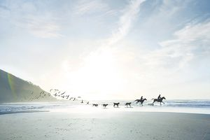 Photo of bird, dogs and horses with riders running on a beach