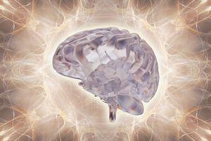 3D illustration of brain.