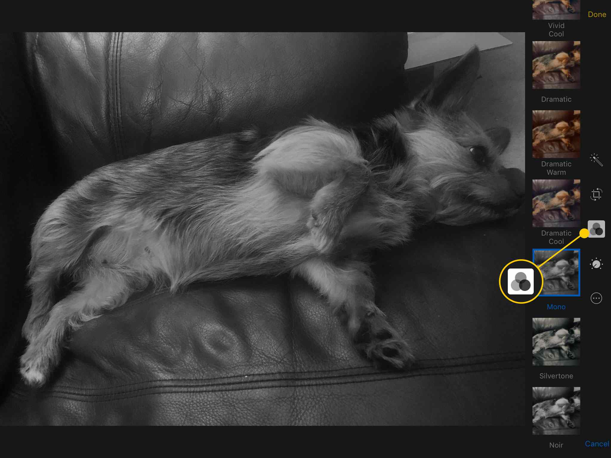 Filters tool in Photos on an iPad