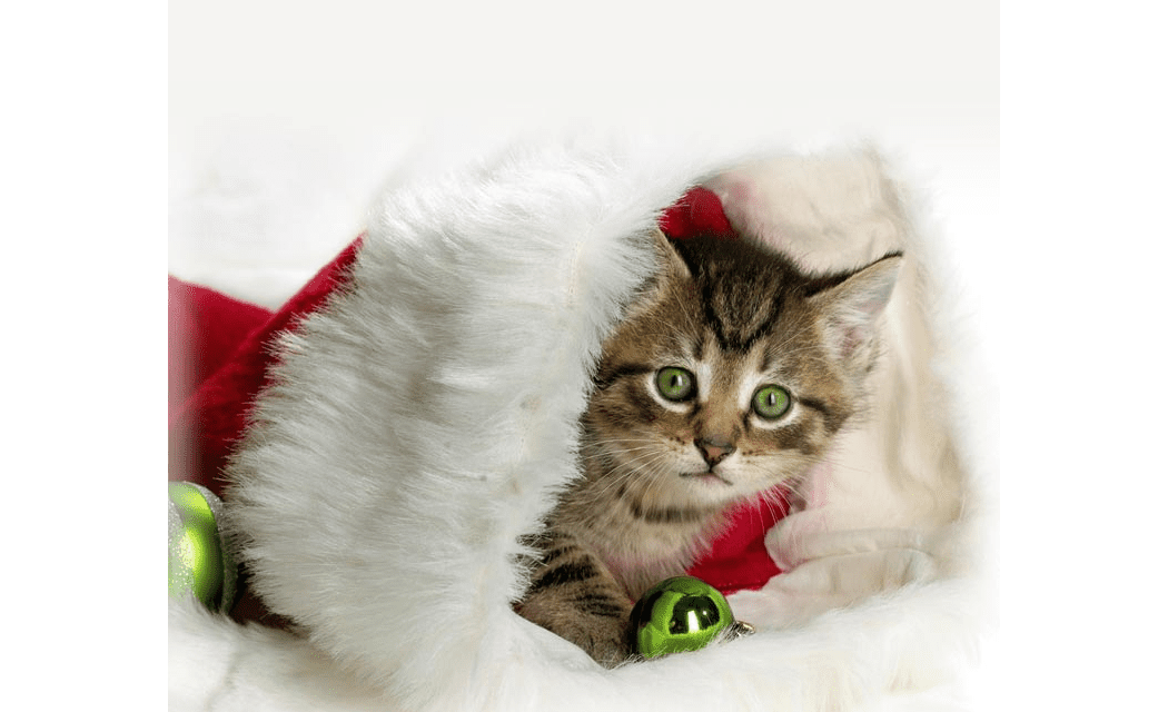 top 16 free christmas email stationery downloads