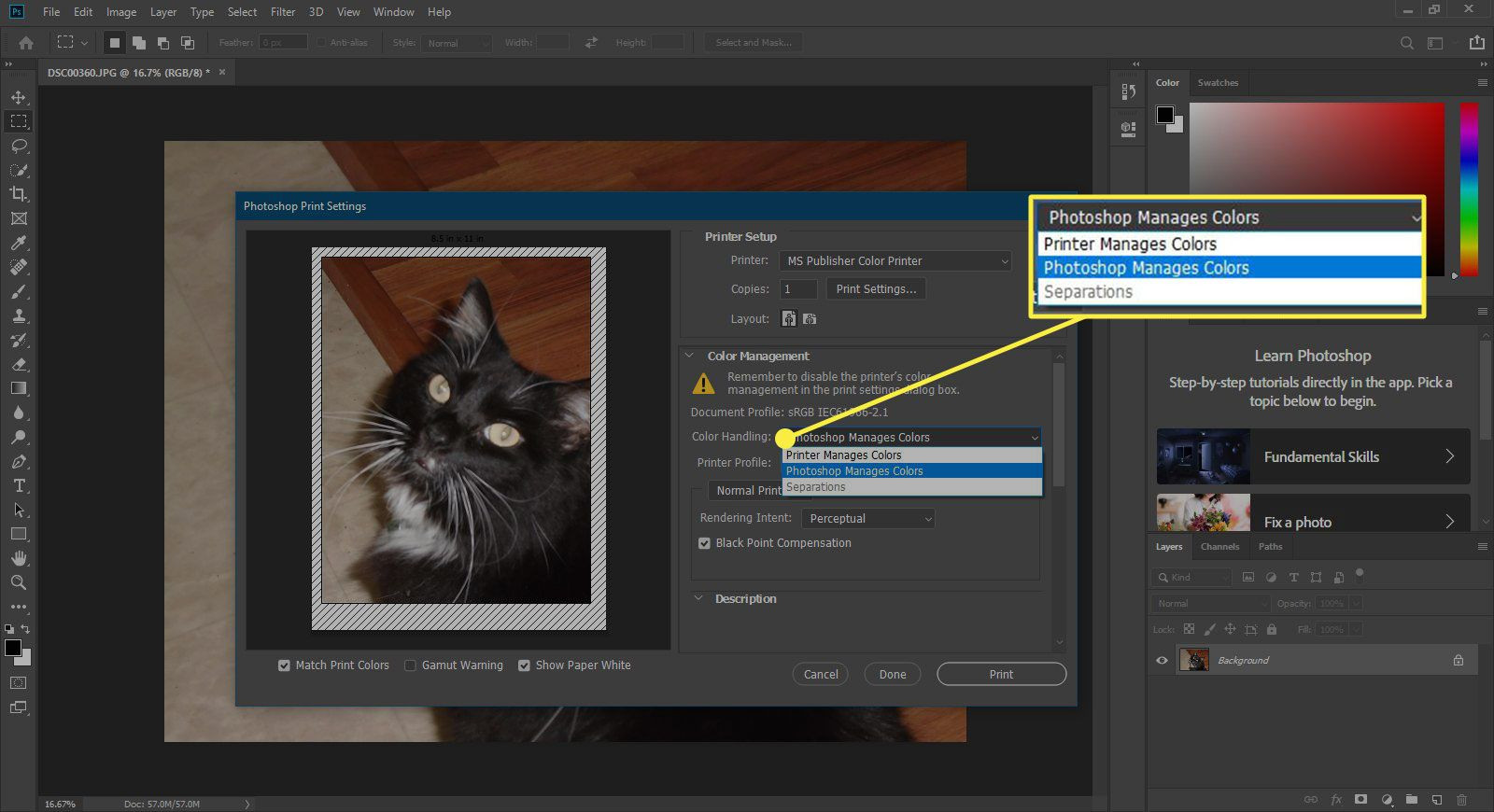 A screenshot of Photoshop's Print window with the Color Handling options highlighted