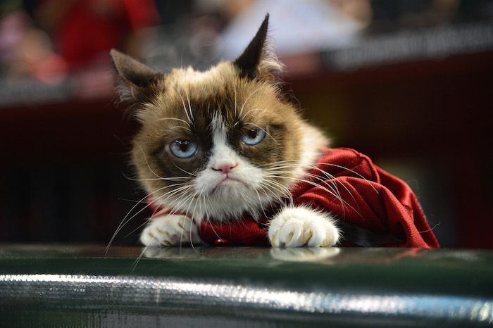 Why You'll Love the 'Tard the Grumpy Cat' Meme