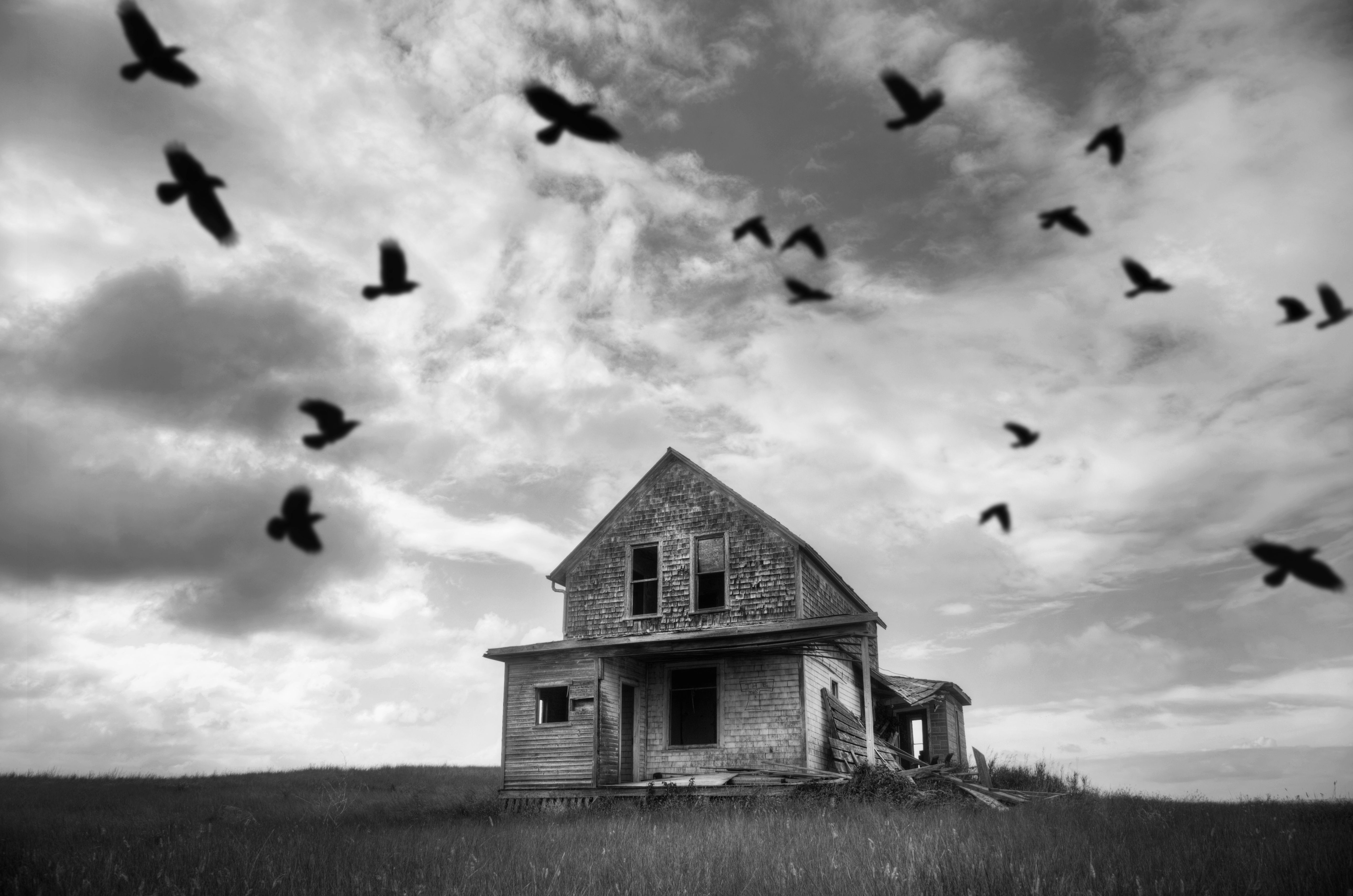 Birds flying over a scary house